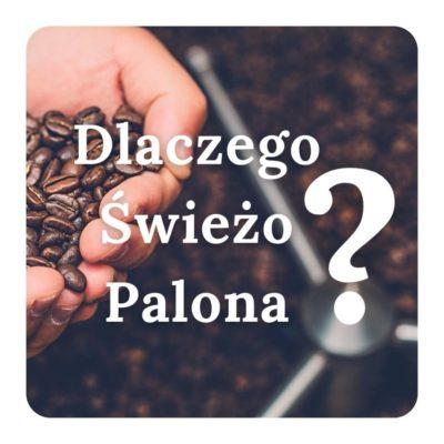 Świeżo Palona Gusto Cafe